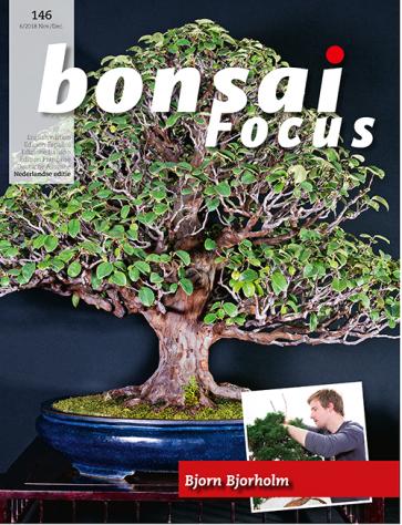 Bonsai Focus NL #146