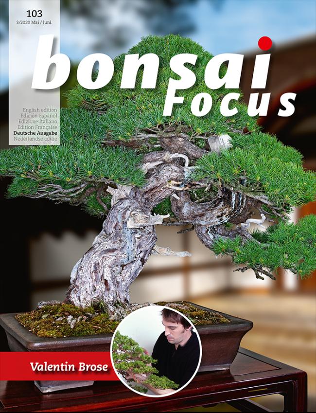 Bonsai Focus De 103 The International Bonsai Magazine