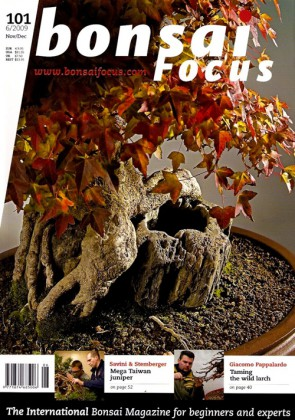 Bonsai Focus EN #101