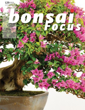 Bonsai Focus EN #129/#152