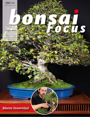 Bonsai Focus EN #166/#189