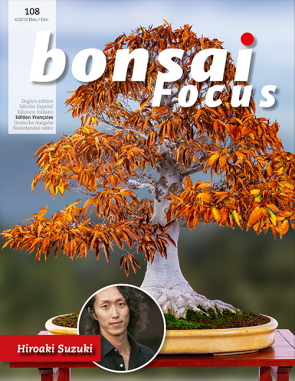 Bonsai Focus FR #108