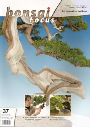 Bonsai Focus FR #37