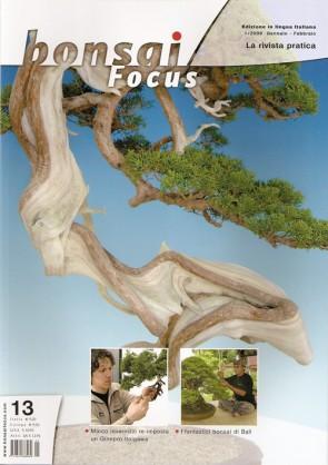 Bonsai Focus  IT #13