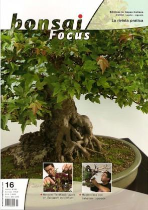 Bonsai Focus IT #16