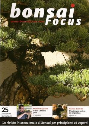 Bonsai Focus IT #25
