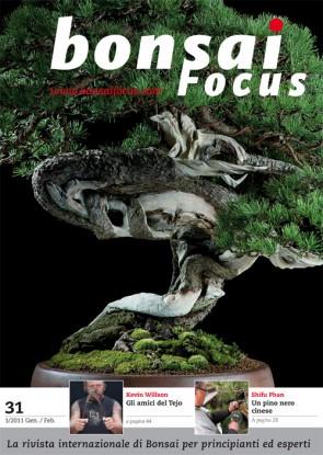 Bonsai Focus IT #31