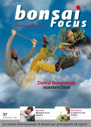 Bonsai Focus IT #37