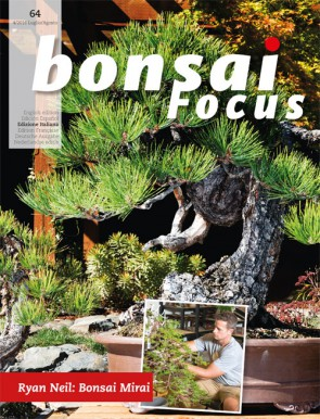 Bonsai Focus IT #64