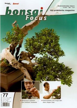 Bonsai Focus NL #77